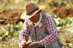 Farmer Juan